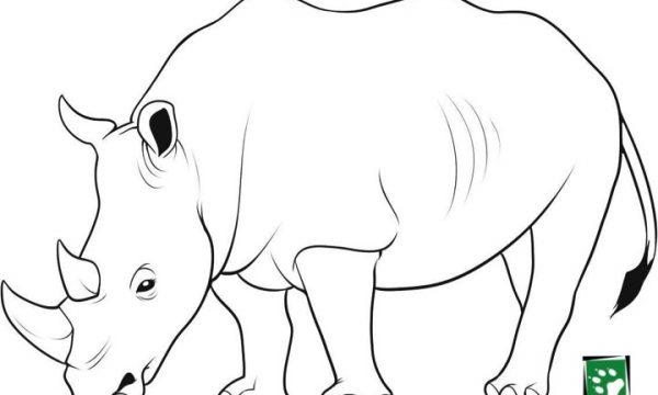 SW Coloring Rhino