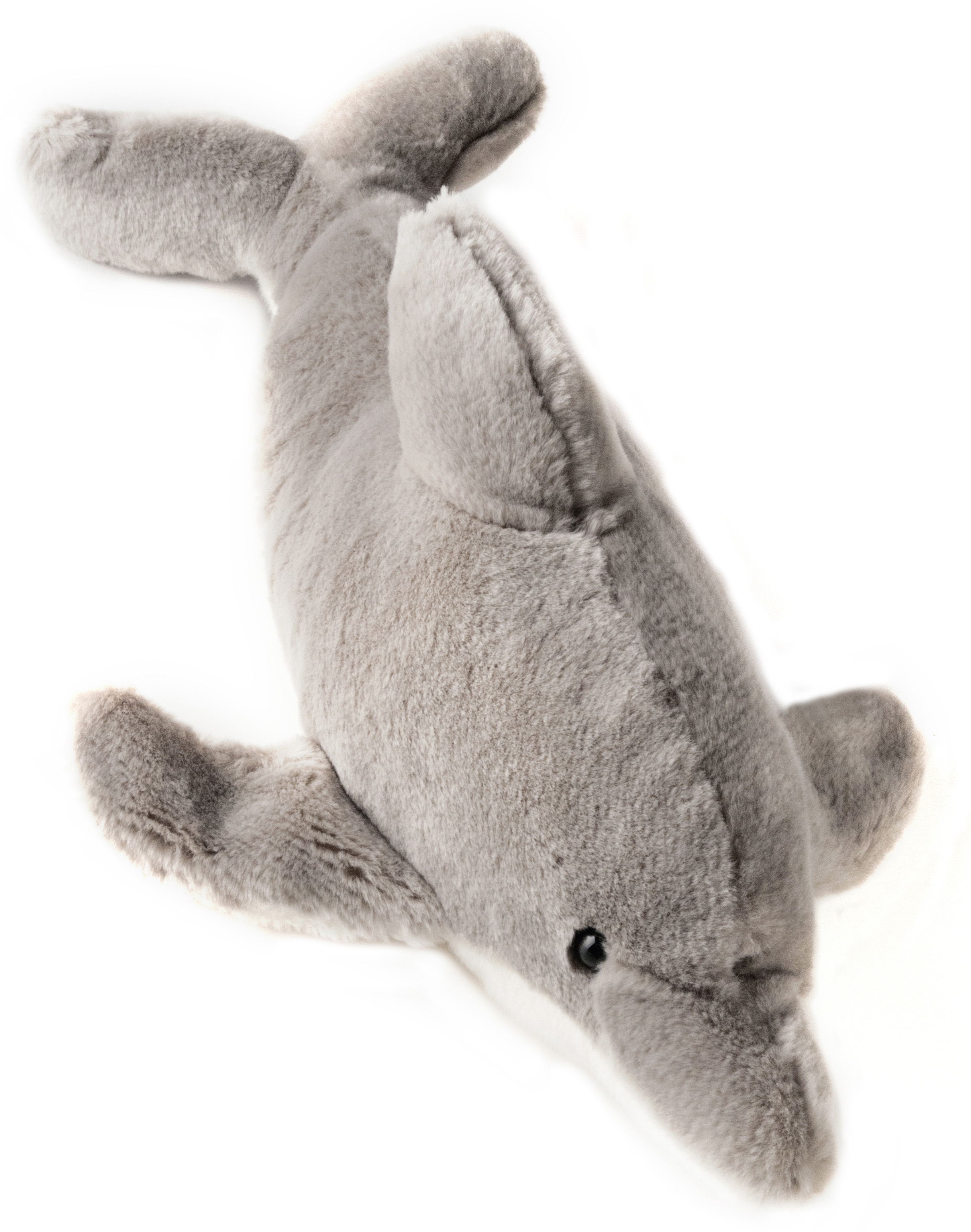 Dolphin Bottle nose 17 copy